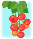 まっかなぴかぴかトマト